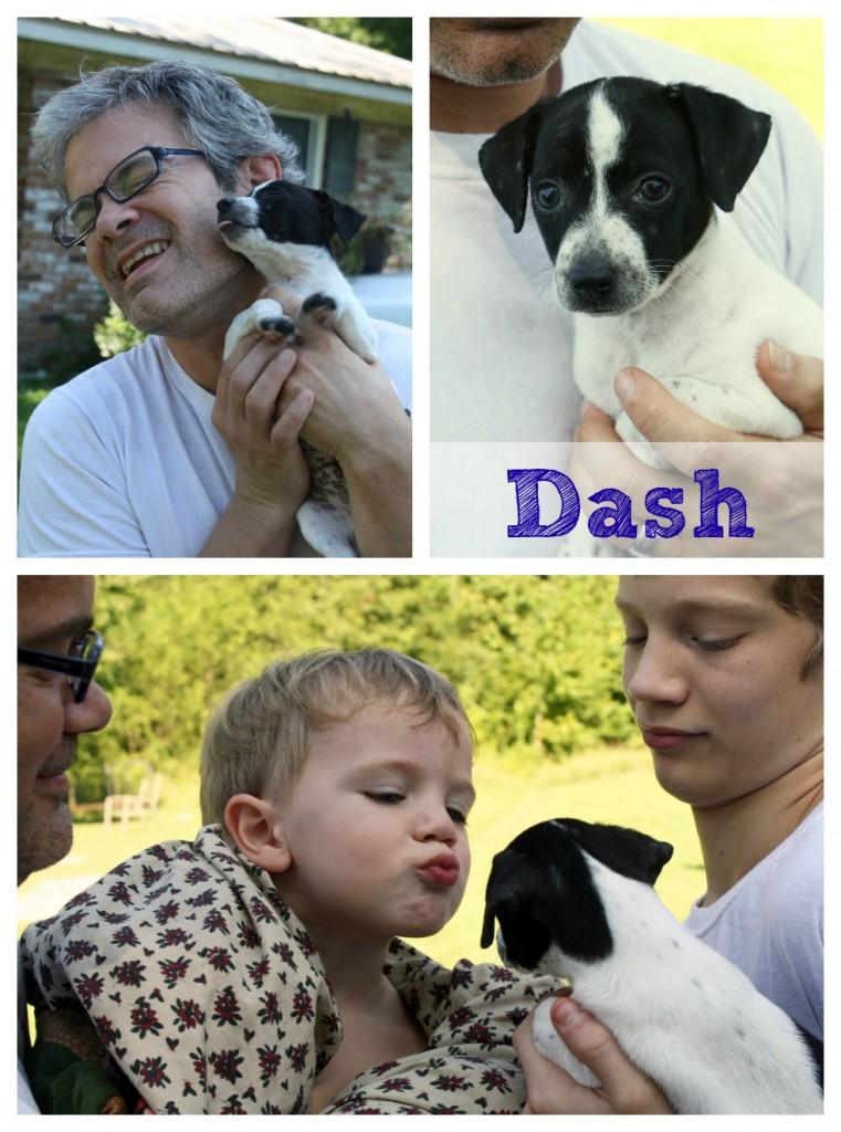 Dash Puppy Love