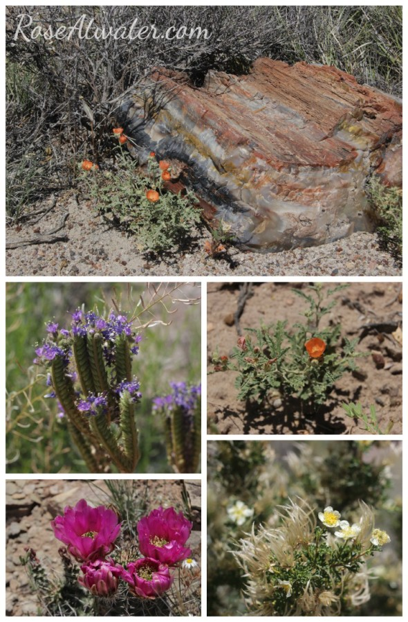 Flowers at the Petrified Forest