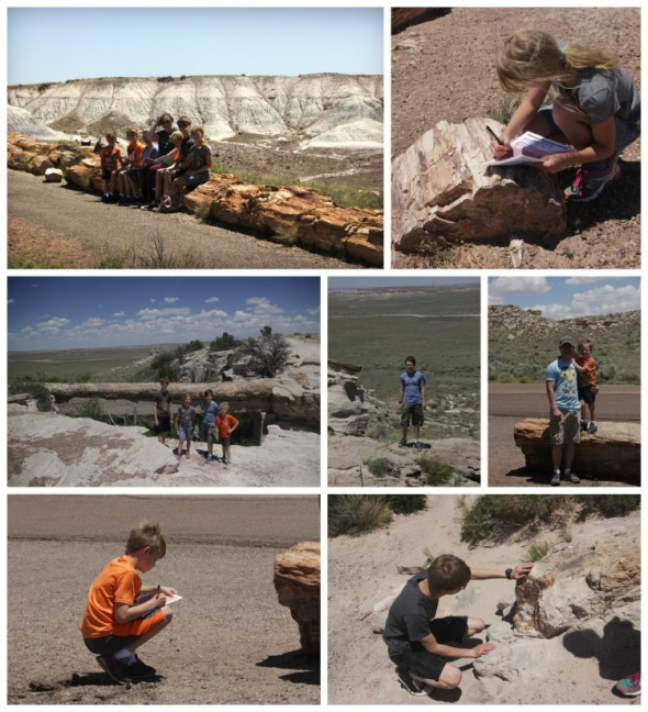 Petrified Forest Pics
