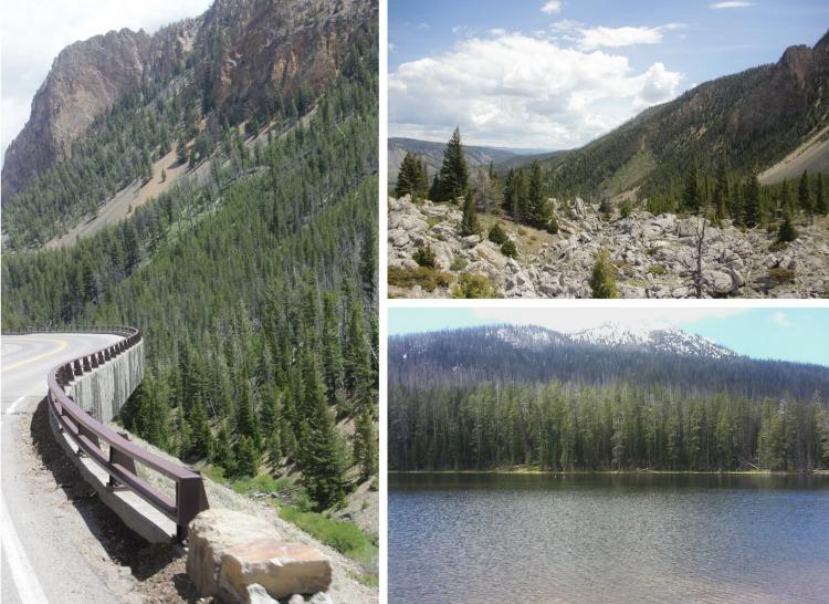 Remote Yellowstone